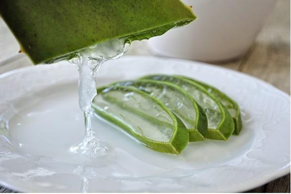 aloe vera plant leaf jelly