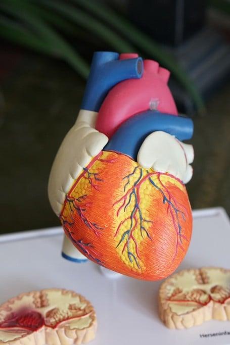 coconut oil for cardiovascular disease